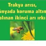 trakyaari