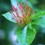 çiçekli bitki