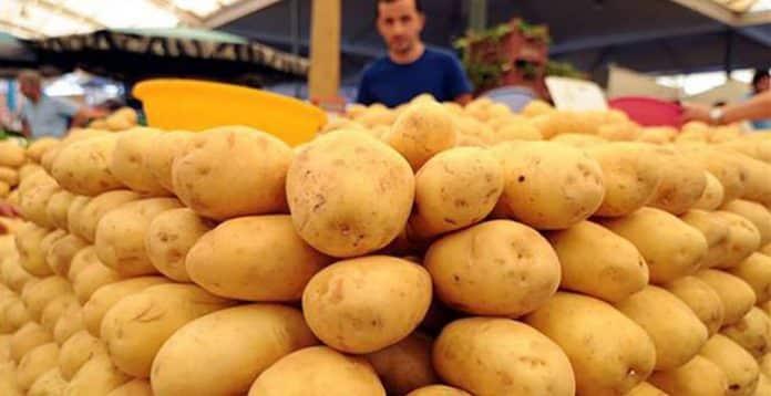 'Milli patates çeşitleri' üreticilere tanıtılmaya başlandı