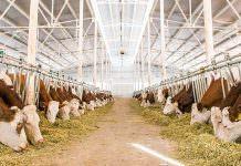 Hayvancılıkta %50 Hibe Alacak 12 Şehir Belli Oldu