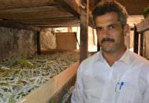 İpek böcekleri köylülere 'ek gelir' sağlıyor