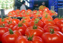 Yaş Meyve Sebze İhracatında Lider: Trabzon