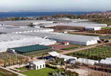 Süs bitkileri OSB 2019'da hizmete girecek